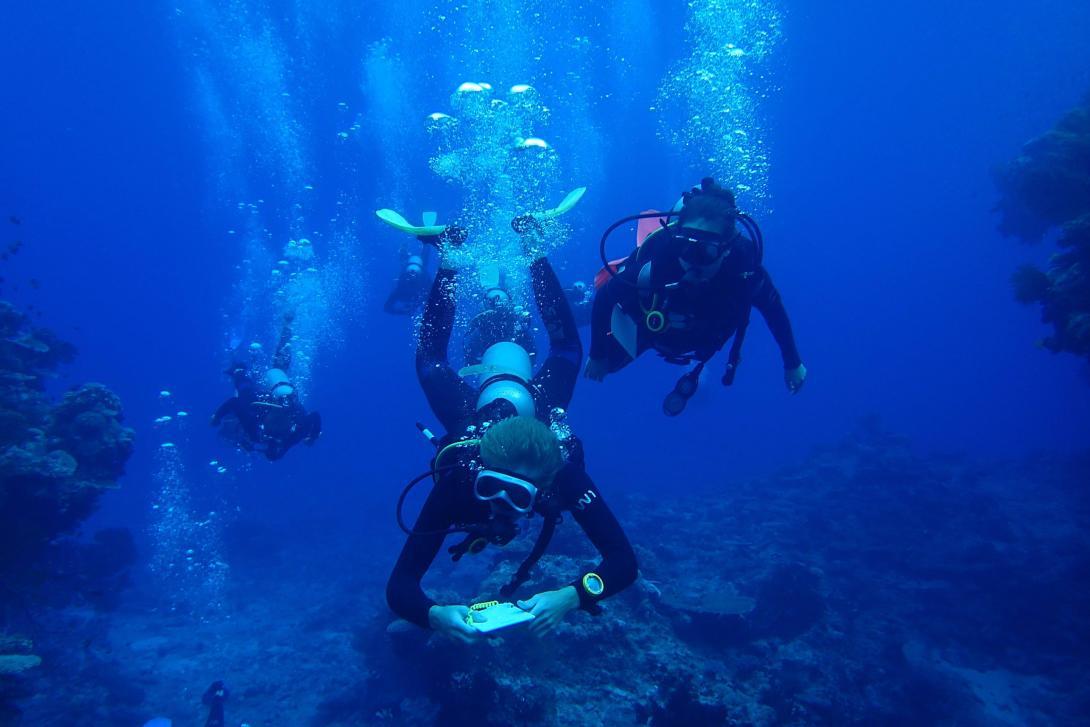 Voluntarios buceando para recolectar información en nuestro voluntariado para salvar tiburones en Fiyi.